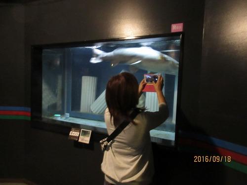 魚を撮影するママを撮影