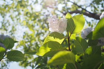 shuku--P6180038.jpg