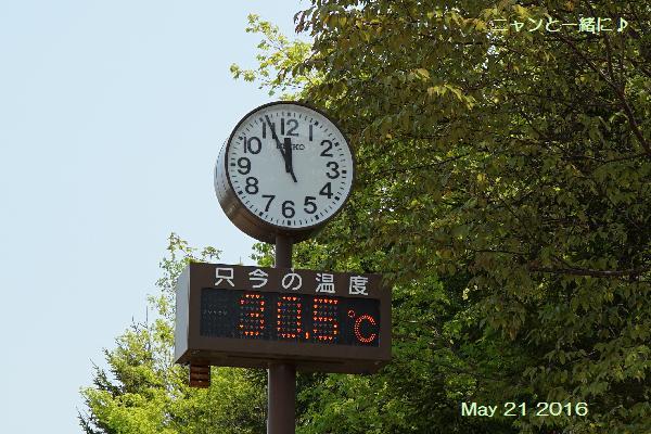 今日の気温1