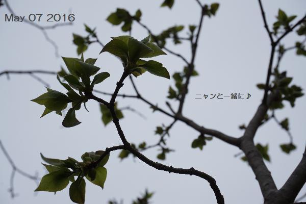 amesora5071034.jpg