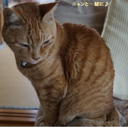 cyako414.jpg