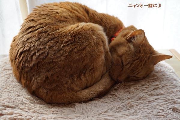cyako42016.jpg