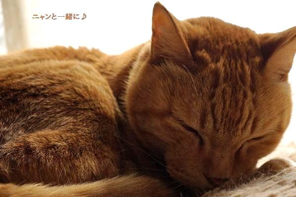 cyako421a.jpg