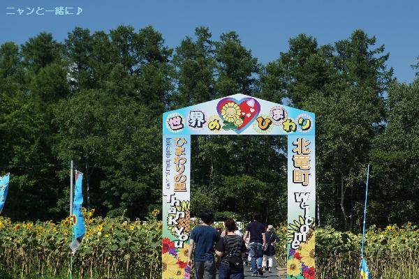 himawari27.jpg