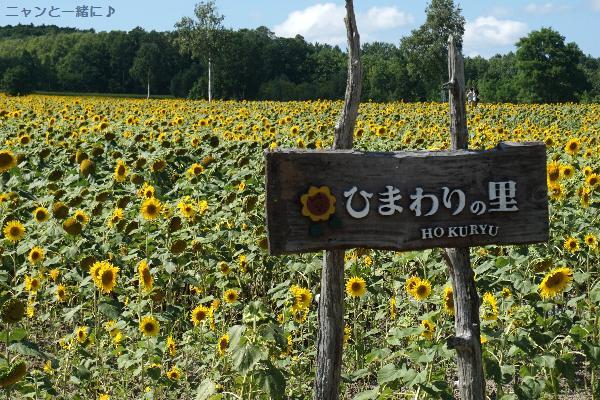 himawari84.jpg