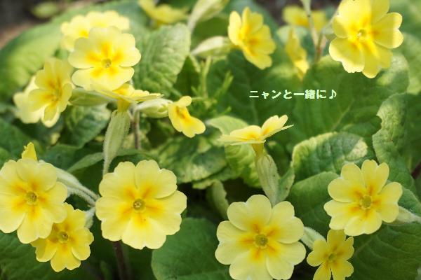 kiiro518.jpg