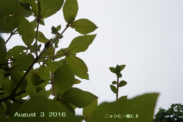 kumori717703.jpg