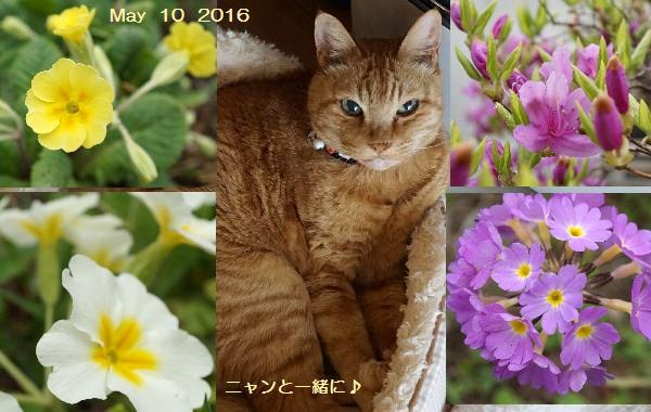 niwatya510.jpg