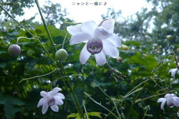 rengesyouma022904.jpg