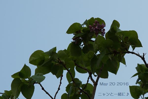 sora642520.jpg