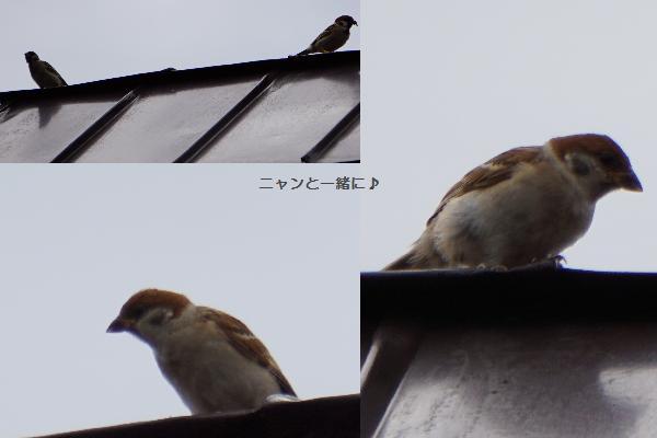 suzume822.jpg