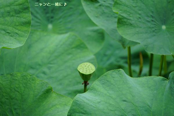 syawa821.jpg