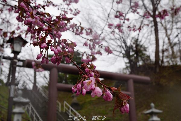 torii429n.jpg