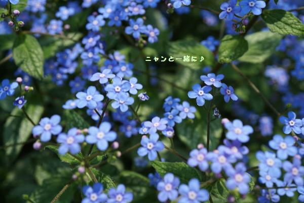 wasurenagusa600.jpg