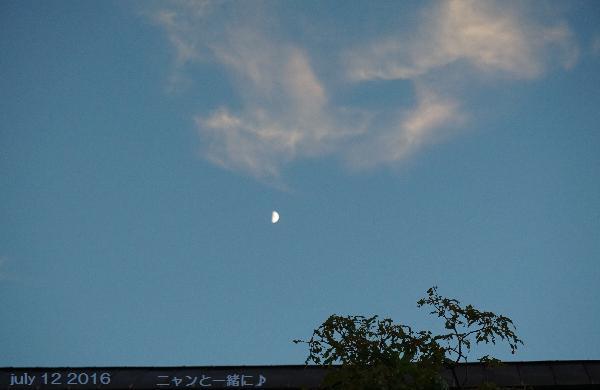 yoru1921712.jpg