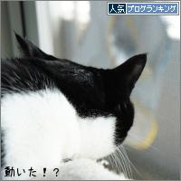 dai20160419_banner.jpg
