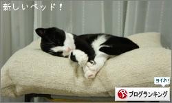 dai20160421_banner.jpg