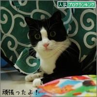 dai20160428_banner.jpg