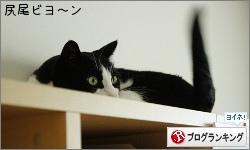 dai20160512_banner.jpg