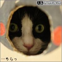 dai20160701_banner.jpg