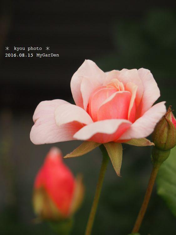 P8154892a.jpg