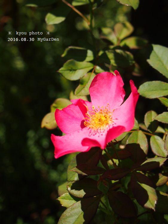 P8304964a.jpg