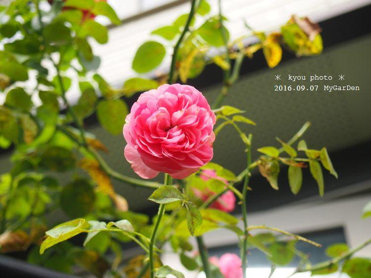 P9075061a.jpg