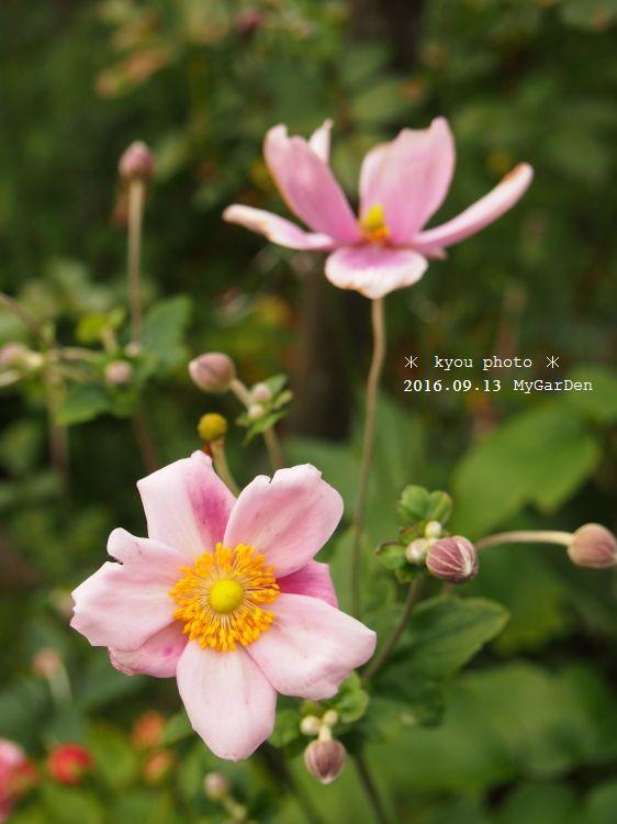 P9135105a.jpg
