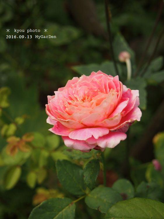 P9135106a.jpg