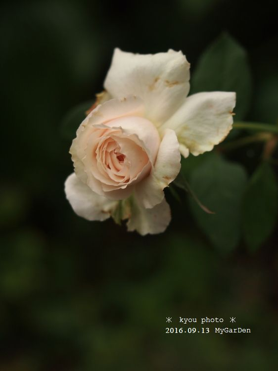 P9135124a.jpg