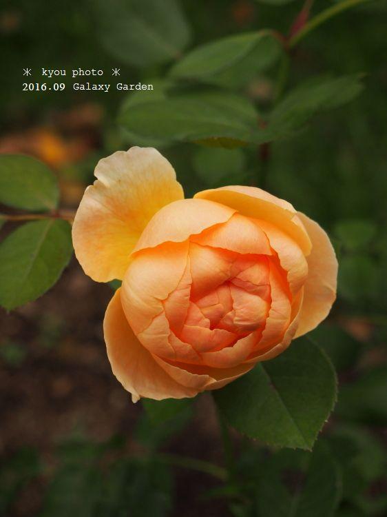 P9135146a.jpg
