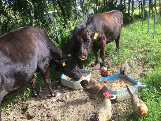 パヨクが沖縄住民を検問!追い返された地元農家がブチキレ!高江ヘリパッド妨害