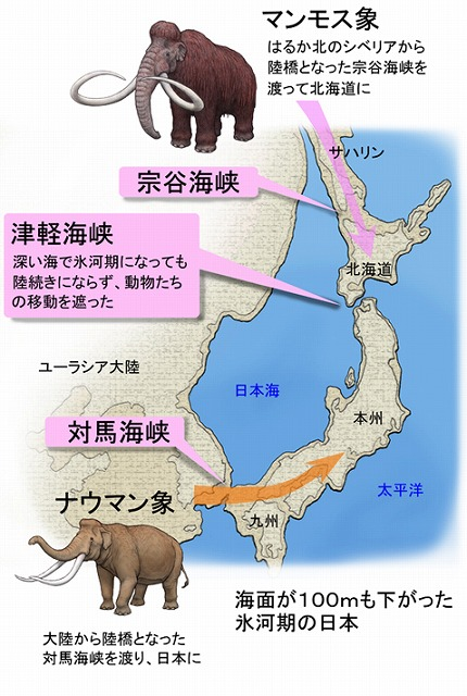 日本人の祖先たちは、約2万年前にマンモスを追ってシベリアから北海道に到達し、その後、南下し日本列島全体へと移り住んでいった。ユーラシア大陸と樺太と北海道などは陸続き。