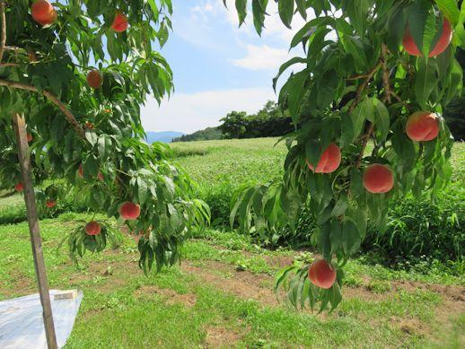 桃畑の向こうには