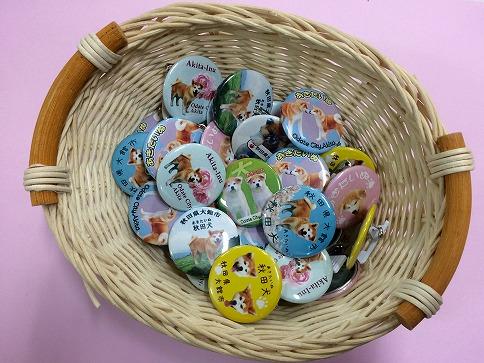 秋田犬缶バッジ新デザイン