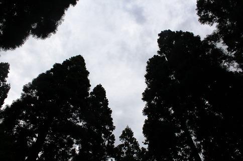 三峯神社杉林