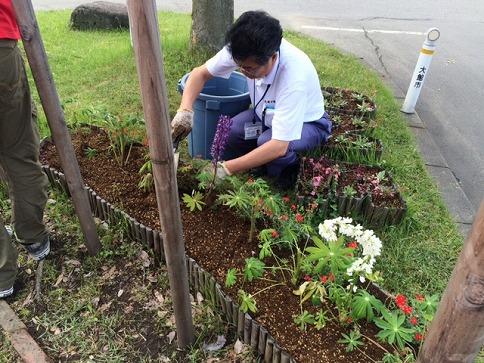 花を植えています。
