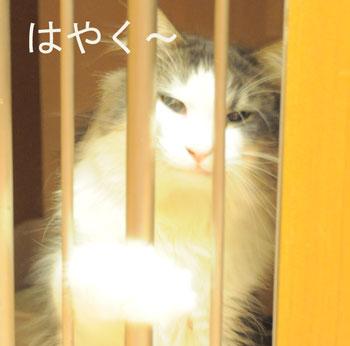 ichigokun.jpg