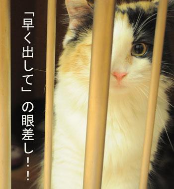 mikochan_20160724131332dc9.jpg