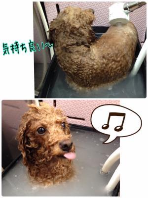 ちょび助_convert_20160507214536