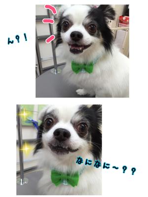 IMG_2912.jpg
