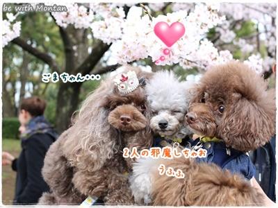 450A1592-20160414.jpg
