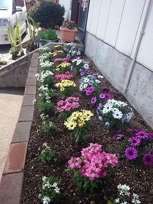 今年の花壇