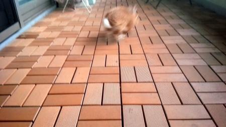 うさぎのべらんぽ
