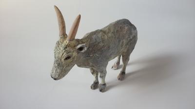 インド牛6