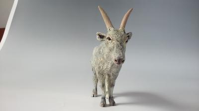 インド牛5