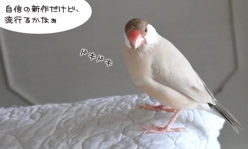ちゃちゃの新作&3羽の元気復活_1