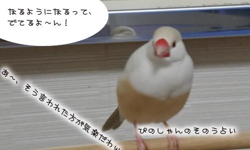 鳥の占い_3
