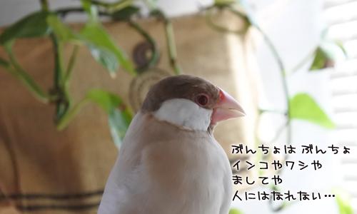 文鳥に歌わせてはいけない曲_3