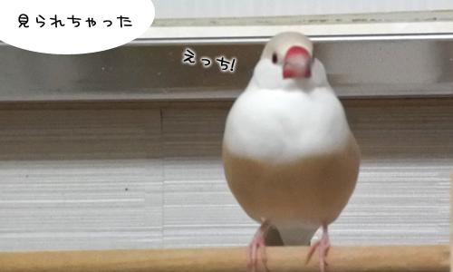 みちゃだめよ_4